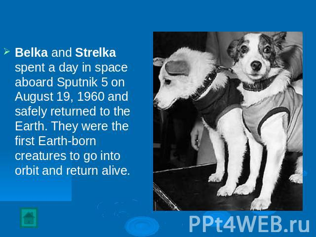 Belka and Strelka spent a day in space aboard Sputnik 5 on August 19, 1960 and safely returned to the Earth. They were the first Earth-born creatures to go into orbit and return alive.
