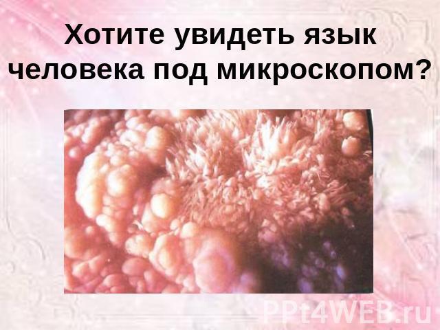 язык человека фото под микроскопом