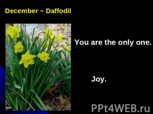 December ~ DaffodilYou are the only one. Joy.