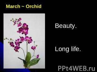 March ~ OrchidBeauty.Long life.