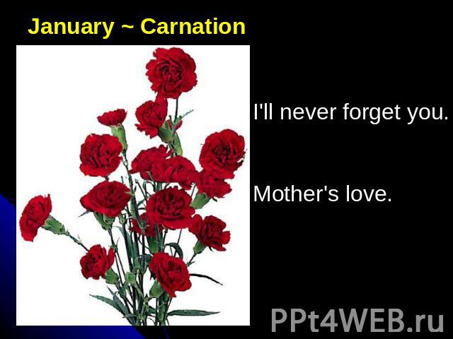 January ~ CarnationI'll never forget you. Mother's love.
