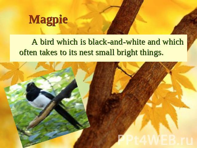 Magpie A bird which is black-and-white and which often takes to its nest small bright things.