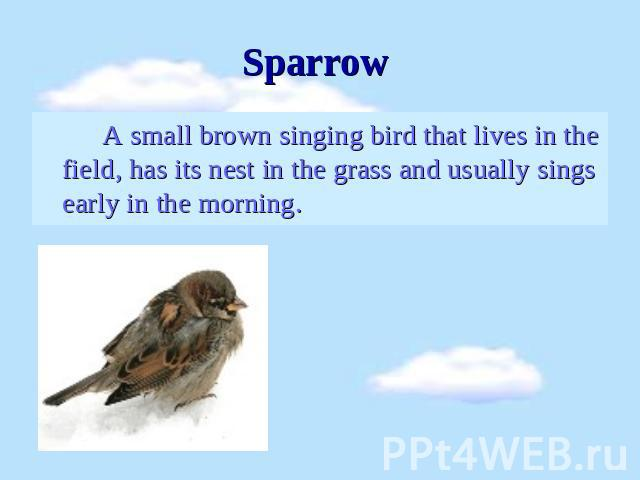 Sparrow A small brown singing bird that lives in the field, has its nest in the grass and usually sings early in the morning.
