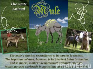 The StateAnimalThe mule's physical resemblance to its parents is obvious.The imp