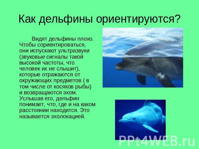 Сообщение про дельфина на английском языке 6 класс