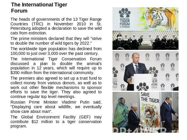 The International Tiger Forum The heads of governments of the 13 Tiger Range Countries (TRC) in November 2010 in St. Petersburg adopted a declaration to save the wild cats from extinction.The prime ministers declared that they will