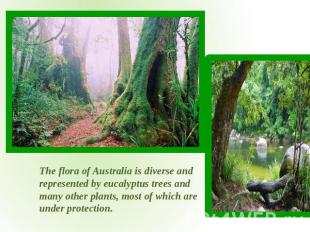 The flora of Australia is diverse and represented by eucalyptus trees and many o