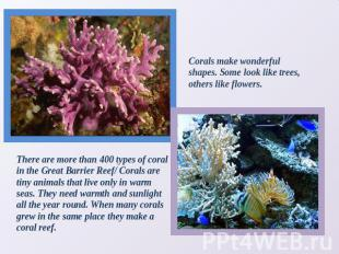 Corals make wonderful shapes. Some look like trees, others like flowers. There a