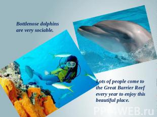 Bottlenose dolphins are very sociable. Lots of people come to the Great Barrier