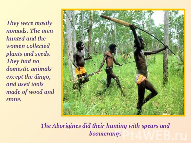 They were mostly nomads. The men hunted and the women collected plants and seeds. They had no domestic animals except the dingo, and used tools made of wood and stone. The Aborigines did their hunting with spears and boomerangs