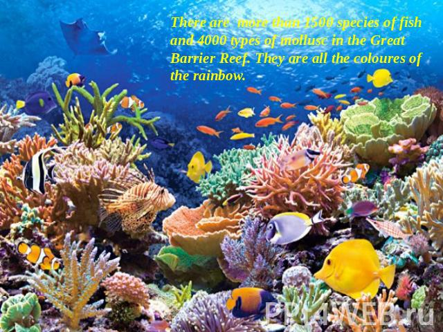 There are more than 1500 species of fish and 4000 types of mollusc in the Great Barrier Reef. They are all the coloures of the rainbow.
