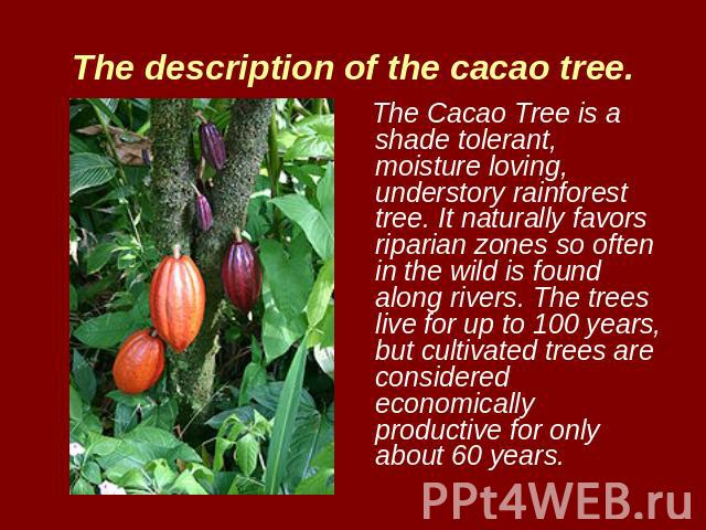 The description of the cacao tree. The Cacao Tree is a shade tolerant, moisture loving, understory rainforest tree. It naturally favors riparian zones so often in the wild is found along rivers. The trees live for up to 100 years, but cultivated tre…