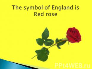 The symbol of England isRed rose