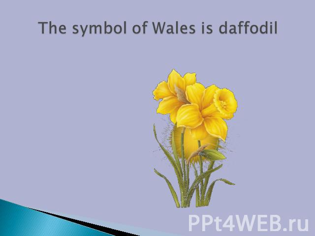 The symbol of Wales is daffodil