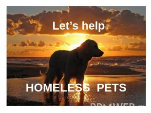Let's help HOMELESS PETS