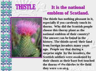 THISTLE It is the national emblem of Scotland. The thistle has nothing pleasant
