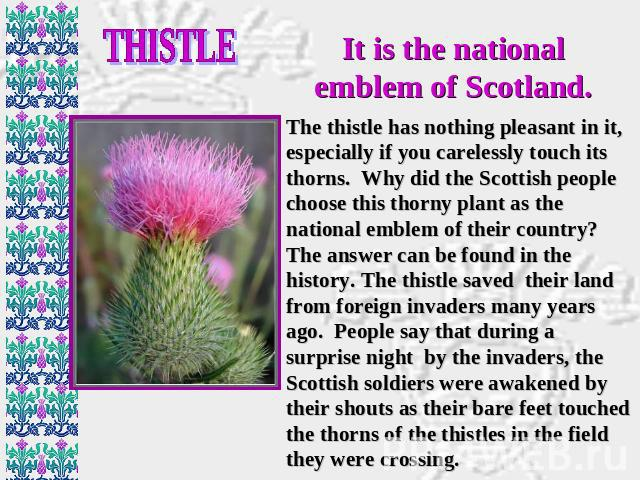 THISTLE It is the national emblem of Scotland. The thistle has nothing pleasant in it, especially if you carelessly touch its thorns. Why did the Scottish people choose this thorny plant as the national emblem of their country? The answer can be fou…