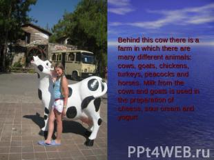 Behind this cow there is a farm in which there are many different animals: cows,