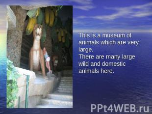 This is a museum of animals which are very large.There are many large wild and d