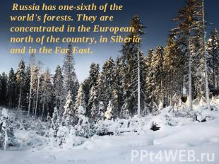 Russia has one-sixth of the world's forests. They are concentrated in the Europe