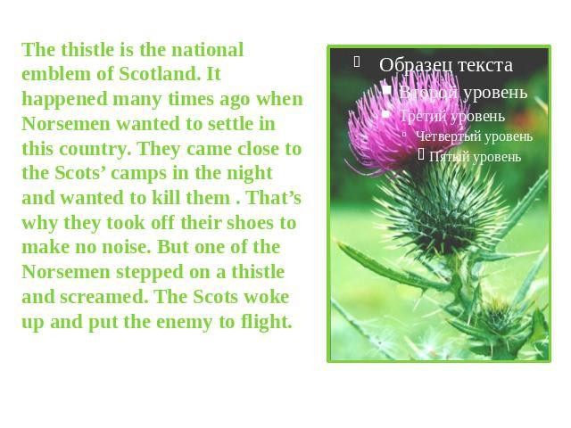 The thistle is the national emblem of Scotland. It happened many times ago when Norsemen wanted to settle in this country. They came close to the Scots' camps in the night and wanted to kill them . That's why they took off their shoes to make no noi…