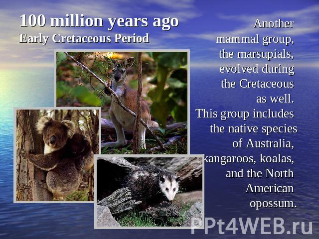 100 million years agoEarly Cretaceous Period Another mammal group, the marsupials, evolved during the Cretaceous as well. This group includes the native speciesof Australia, kangaroos, koalas, and the North American opossum.