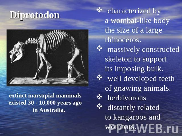 Diprotodon characterized by a wombat-like body the size of a large rhinoceros. massively constructed skeleton to support its imposing bulk. well developed teethof gnawing animals. herbivorous distantly related to kangaroos and wombats. extinct marsu…