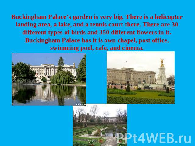 Buckingham Palace's garden is very big. There is a helicopter landing area, a lake, and a tennis court there. There are 30 different types of birds and 350 different flowers in it. Buckingham Palace has it is own chapel, post office, swimming pool, …