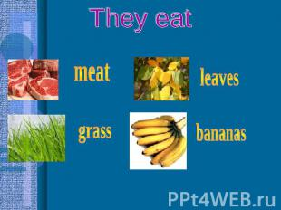 They eat meat grass leaves bananas