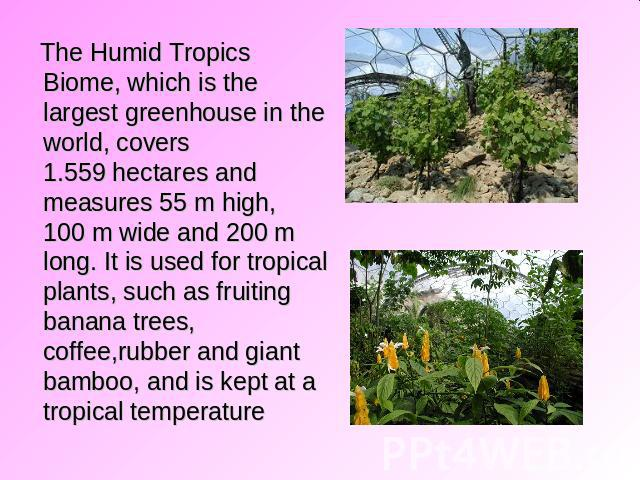 The Humid Tropics Biome, which is the largest greenhouse in the world, covers 1.559 hectares and measures 55 m high, 100 m wide and 200 m long. It is used for tropical plants, such as fruiting banana trees, coffee,rubber and giant bamboo, and is kep…