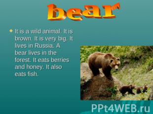 bear It is a wild animal. It is brown. It is very big. It lives in Russia. A bea