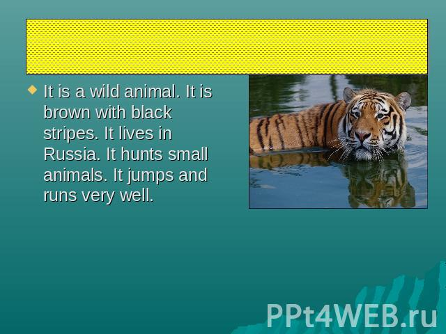 tiger It is a wild animal. It is brown with black stripes. It lives in Russia. It hunts small animals. It jumps and runs very well.