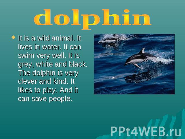 dolphin It is a wild animal. It lives in water. It can swim very well. It is grey, white and black. The dolphin is very clever and kind. It likes to play. And it can save people.