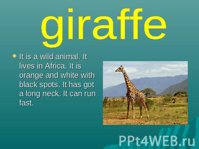 giraffe It is a wild animal. It lives in Africa. It is orange and white with black spots. It has got a long neck. It can run fast.