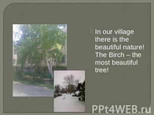 In our village there is the beautiful nature! The Birch – the most beautiful tre