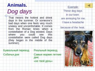 Animals.Dog days Example:These dog days in our town are annoying for me.I have a
