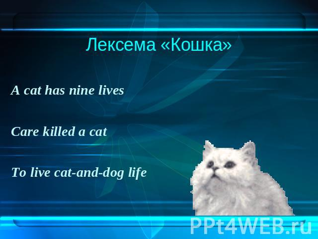 Лексема «Кошка»A cat has nine livesCare killed a catTo live cat-and-dog life