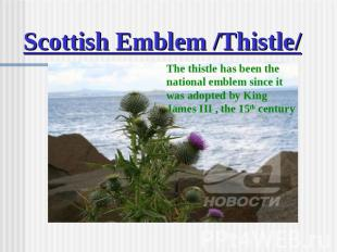 Scottish Emblem /Thistle/ The thistle has been the national emblem since it was