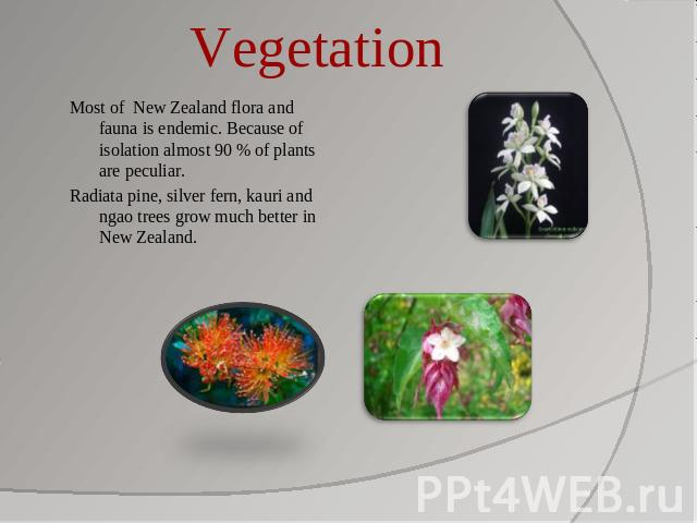 Vegetation Most of New Zealand flora and fauna is endemic. Because of isolation almost 90 % of plants are peculiar.Radiata pine, silver fern, kauri and ngao trees grow much better in New Zealand.