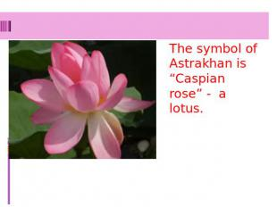 "The symbol of Astrakhan is ""Caspian rose"" - a lotus."