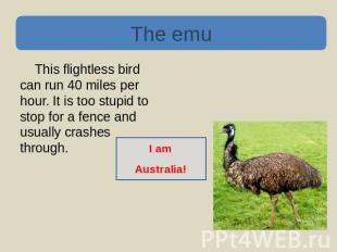 The emu This flightless bird can run 40 miles per hour. It is too stupid to stop