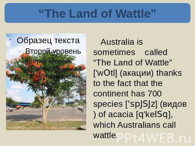 """The Land of Wattle"" Australia is sometimes called ""The Land of Wattle"" ['wOtl] (акации) thanks to the fact that the continent has 700 species ['spJSJz] (видов) of acacia [q'keISq], which Australians call wattle."