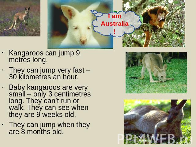 Kangaroos can jump 9 metres long.They can jump very fast – 30 kilometres an hour.Baby kangaroos are very small – only 3 centimetres long. They can't run or walk. They can see when they are 9 weeks old. They can jump when they are 8 months old.
