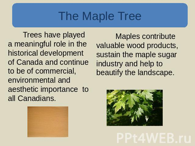 The Maple Tree Trees have played a meaningful role in the historical development of Canada and continue to be of commercial, environmental and aesthetic importance to all Canadians. Maples contribute valuable wood products, sustain the maple sugar i…