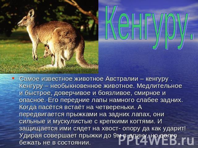Проект знакомство с кенгуру