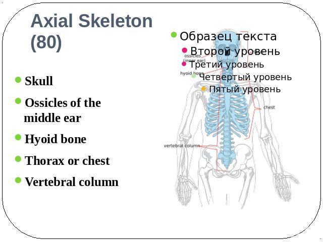 Реферат на тему скелетон скачать реферат образец для студента скачать