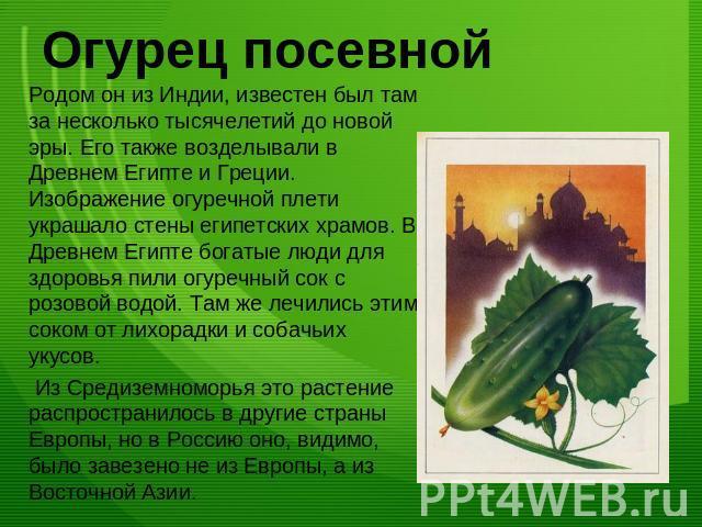 Огурец и его картинка и рассказы