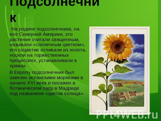 Презентация на тему Растения переселенцы скачать бесплатно  Подсолнечник На родине подсолнечника на юге Северной Америки это растение считали священным