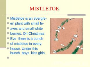 MISTLETOE Mistletoe is an evergre-en plant with small le-aves and small white be