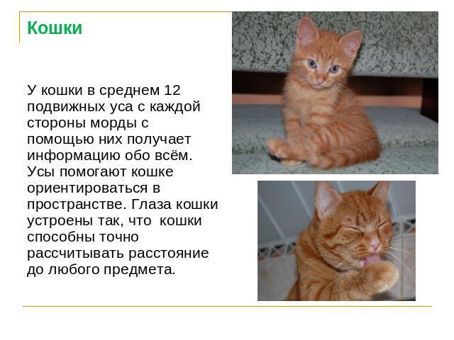 Доклад о домашнем животном кошке 5586
